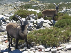 Der Weg ist das Ziel (extracto de mi diario de viaje en la Sierra de Gredos)